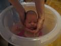 Wiki w kąpieli